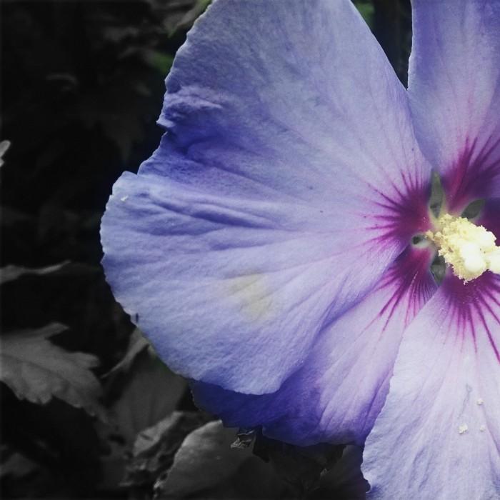 Blume1 (2)